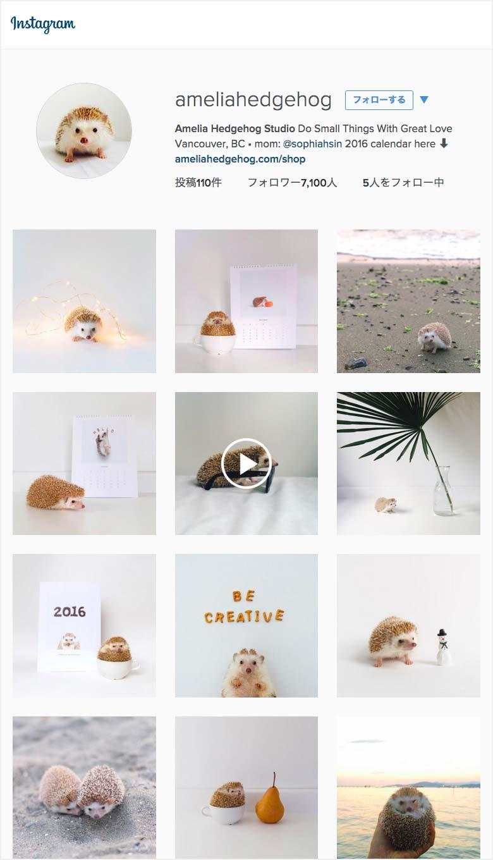 ameliahedgehog